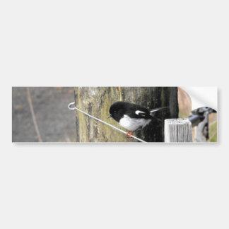 Pájaro de Tomtit Nueva Zelanda Pegatina Para Auto