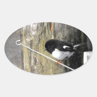 Pájaro de Tomtit Nueva Zelanda Pegatina Ovalada