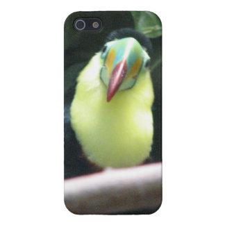 Pájaro de Toucan iPhone 5 Carcasas