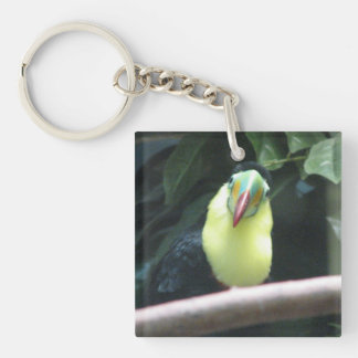 Pájaro de Toucan Llaveros