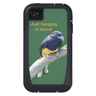 Pájaro de Trogon que cuelga adentro allí Funda Para iPhone 4