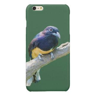 Pájaro de Trogon que cuelga en personalizable del