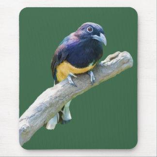 Pájaro de Trogon que cuelga en personalizable del  Mouse Pads