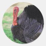 Pájaro de Turquía de la acción de gracias Pegatinas