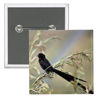 Pájaro de viuda de Redcollared Pin Cuadrado