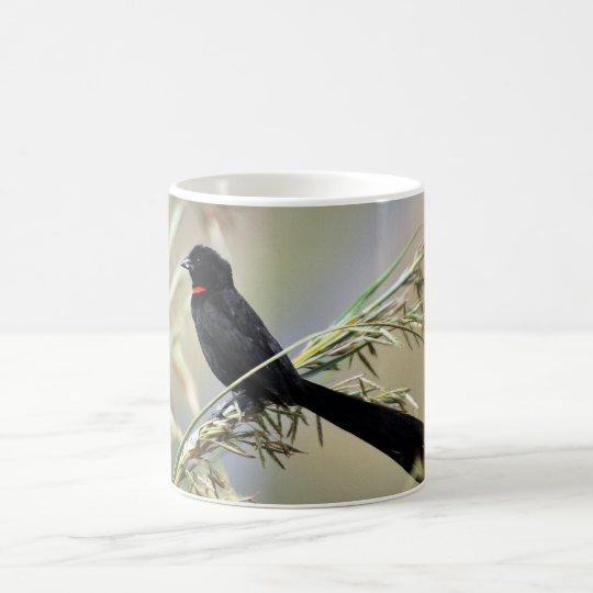 Pájaro de viuda de Redcollared Taza De Café