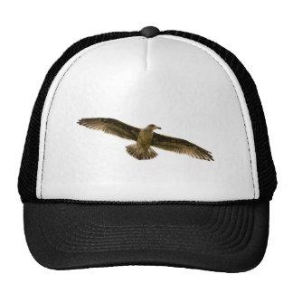 Pájaro de vuelo gorro