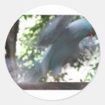 Pájaro de vuelo pegatinas redondas