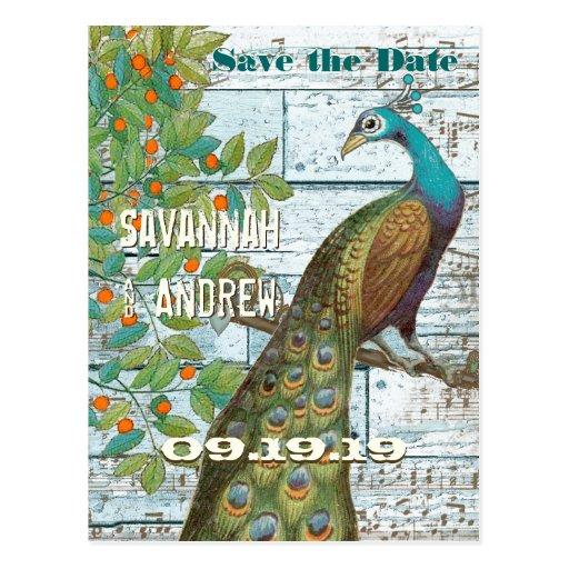 Pájaro del amor del pavo real que se sienta en una postales