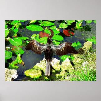 Pájaro del Anhinga, parque nacional de los marisma Posters