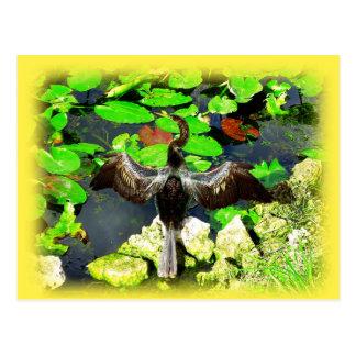 Pájaro del Anhinga, parque nacional de los marisma Postal