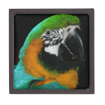 Pájaro del Ara Caja De Joyas De Calidad