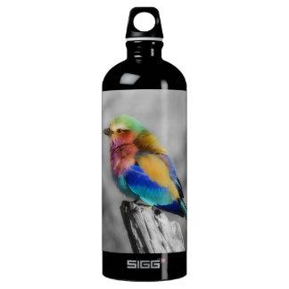 Pájaro del arco iris