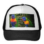 Pájaro del arco iris IMG_0212_2; s 2 por EmilyWint Gorro