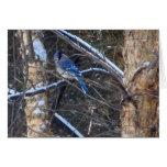 Pájaro del arrendajo azul en árboles del invierno tarjeta pequeña