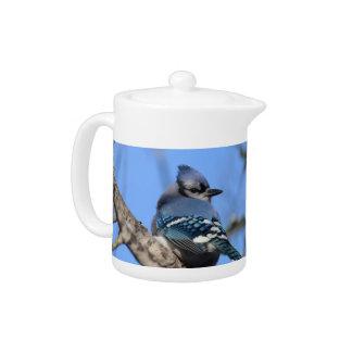 Pájaro del arrendajo azul en pote del té del invie