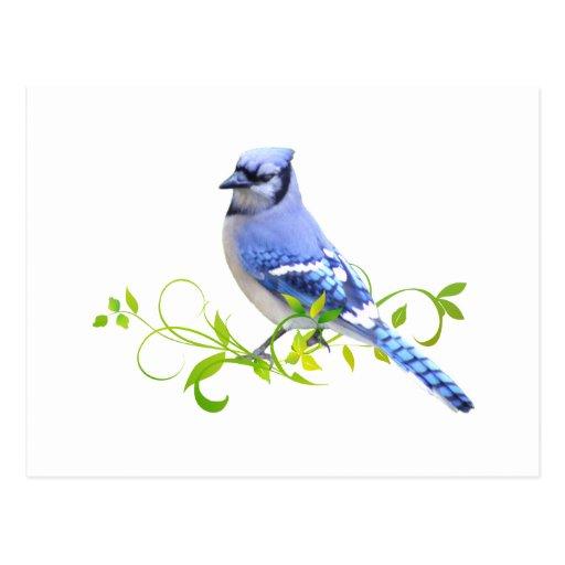 Pájaro del arrendajo azul tarjeta postal