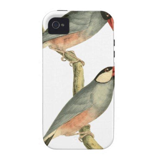 Pájaro del arroz, pájaro del arroz, o pájaro Illus Case-Mate iPhone 4 Carcasas