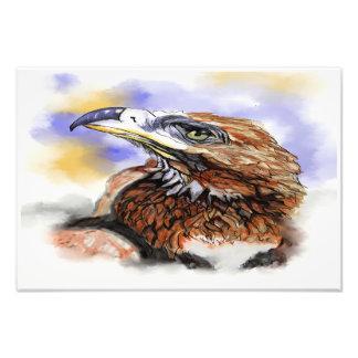 Pájaro del australiano de Wedgetailed Eagle Fotografías