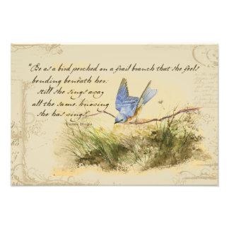 Pájaro del Bluebird en un poema de Victor Hugo de Fotografías