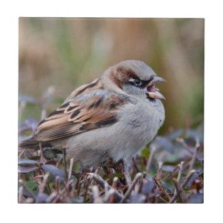 Pájaro del canto tejas  cerámicas