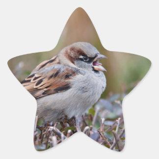 Pájaro del canto colcomanias forma de estrellaes personalizadas