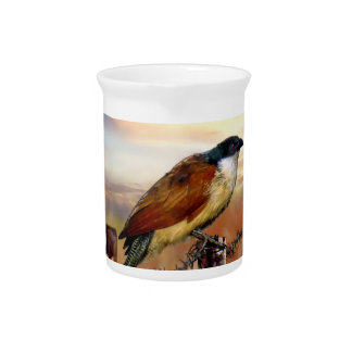 Pájaro del cuco de Coucal de Burchell Jarra Para Bebida