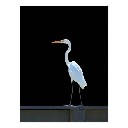 Pájaro del Egret en la verja Tarjeta Postal