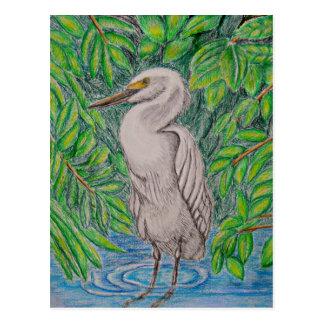 Pájaro del Egret Postal