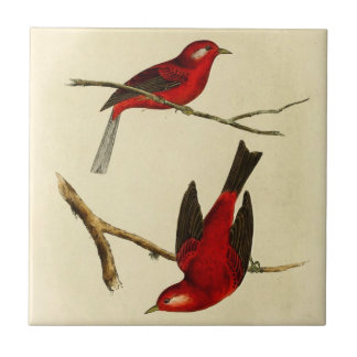 Pájaro del Flycatcher del vintage Azulejo Cuadrado Pequeño