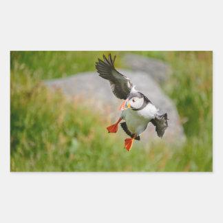 Pájaro del frailecillo atlántico que vuela al pegatina rectangular