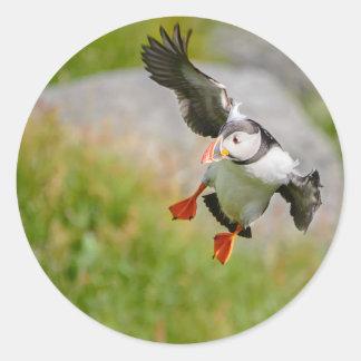 Pájaro del frailecillo atlántico que vuela pegatina redonda