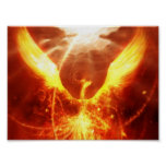 Pájaro del fuego poster