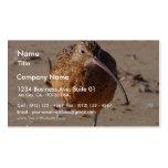 Pájaro del gaitero de la arena en la playa tarjetas de visita