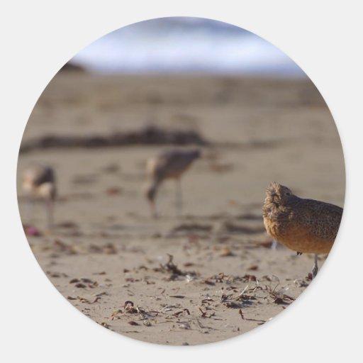 Pájaro del gaitero de la arena etiqueta