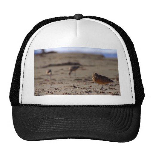 Pájaro del gaitero de la arena gorros