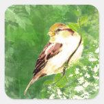 Pájaro del gorrión de canción de la acuarela en calcomanías cuadradass