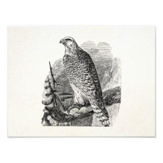 Pájaro del halcón del vintage - espacio en blanco fotografias