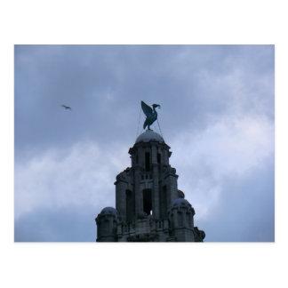 Pájaro del hígado en Liverpool Postales