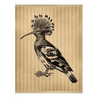 Pájaro del Hoopoe del vintage Tarjetas Postales
