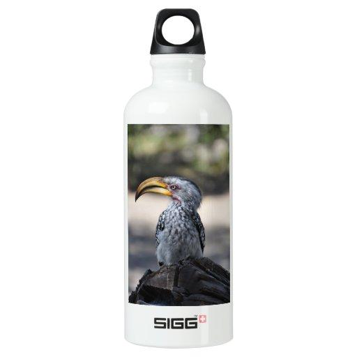 Pájaro del Hornbill
