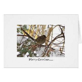 Pájaro del invierno tarjeta de felicitación