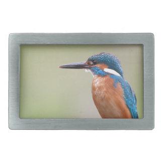 Pájaro del martín pescador hebilla cinturón rectangular