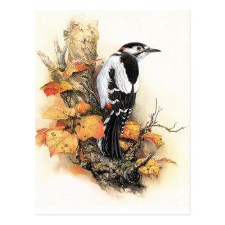 Pájaro del otoño postales