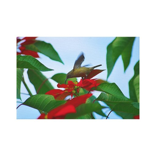 pájaro del pájaro del colibrí+en+colibrí del lona estirada galerias