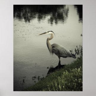 Pájaro del pantano en la orilla posters