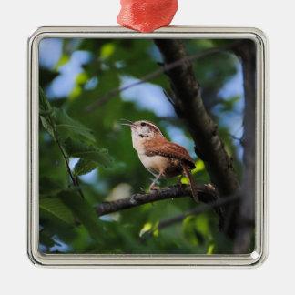 Pájaro del patio trasero del Wren de Bewick Ornatos
