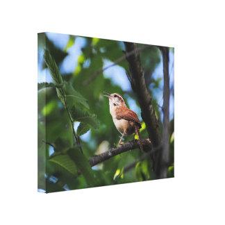 Pájaro del patio trasero del Wren de Bewick Lienzo Envuelto Para Galerias