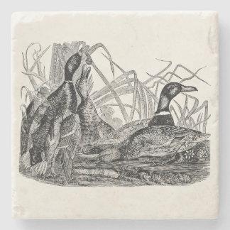 Pájaro del pato del pato silvestre del vintage - posavasos de piedra