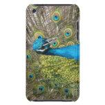 Pájaro del pavo real con las plumas hermosas iPod Case-Mate fundas
